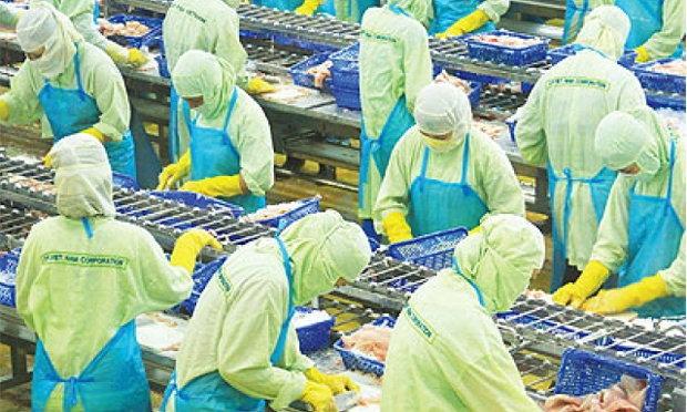 ซี.พี.โหมบุกตลาดส่งออกปลาดอรี่ ดึงเกษตรกรเวียดนามร่วมผลิตเพิ่ม1.2หมื่นตัน/ปี