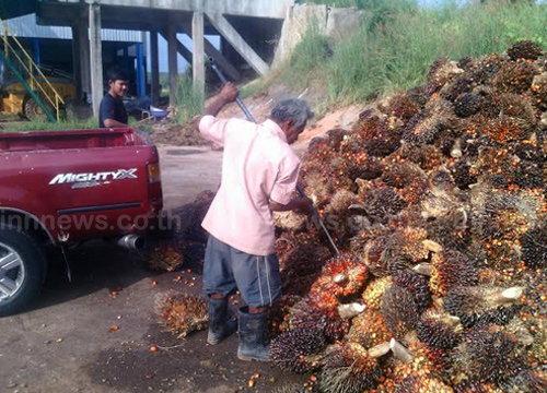 เกษตรกรขู่บุกทำเนียบหากรัฐนำเข้าปาล์มน้ำมัน