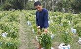 รับมือหน้าฝน เกษตรกรหันปลูกพริกในกระสอบ ลูกดก-ให้ผลผลิตต่อเนื่อง