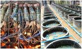 เทคนิคเลี้ยงกุ้งยักษ์ในบ่อซีเมนต์แบบง่ายๆ ได้ยอดขายกิโลละเป็นพัน