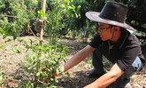 หนุ่มนักกม.หัวเกษตร ปลูกผักหวานป่าแก้แล้ง-ไม่ใช่สารเคมี ลูกค้าแห่ซื้อจนไม่พอขาย