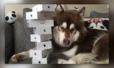 วิถีคนรวย! ลูกเศรษฐีในจีนซื้อ iPhone7 ให้น้องหมา 8 เครื่อง