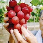 ผลไม้2---