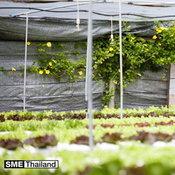 ฟาร์มผักปลอดสาร