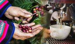 จากดอยสู่แก้ว การเดินทางของเมล็ดกาแฟที่เป็นมากกว่าเครื่องดื่มของคนเมือง