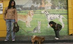 ตลาดสัตว์เลี้ยงจีนขยายตัวก้าวกระโดด 20% ต่อปี