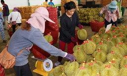 """""""อาลีบาบา"""" ทำสัญญาซื้อทุเรียนไทยปีละ 8 แสนลูกส่งขายจีน"""