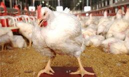 CPFย้ำไก่ ′ซีพี′ ไร้ไข้หวัดนกอย่าเชื่อข้อมูลในไลน์