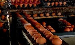 """""""ไข่ไก่"""" ราคาขยับขึ้น 40 สตางค์/ฟอง"""