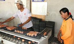 ผู้เลี้ยงไก่ไข่ จ่อปรับราคาไข่ไก่ขึ้นอีกฟองละ 10 สตางค์!