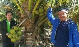 สร้างสวนมะพร้าวเงินแสน ด้วยฮอร์โมนไข่ ที่กันทรวิชัย