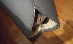PURRU ไอเดียธุรกิจจากคนรักแมว