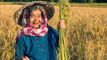 เกษตรกรเฮ! ราคาข้าวหอมมะลิ-มันสำปะหลัง พุ่งสูงสุดรอบ 10 ปี