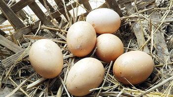 เกษตรทางเลือกใหม่ เลี้ยงไก่ไข่อินทรีย์ ได้กำไรหลักหมื่น