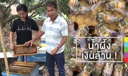 พลิกชีวิต ! จากคนไร้บ้าน มาเลี้ยงผึ้ง สร้างรายได้ปีละกว่า 3 ล้าน