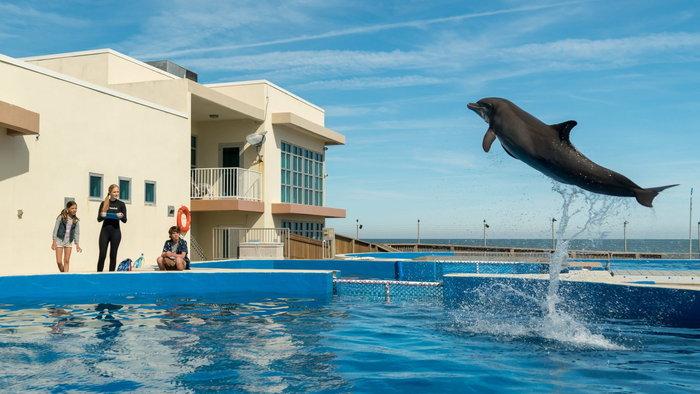 รีวิว Bernie The Dolphin เบอร์นี่ โลมาน้อย หัวใจมหาสมุทร