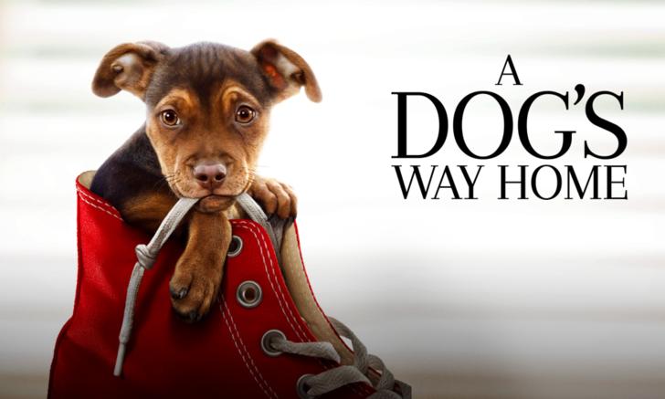 A Dog's Way Home เมื่อน้องหมาหาทางกลับบ้าน