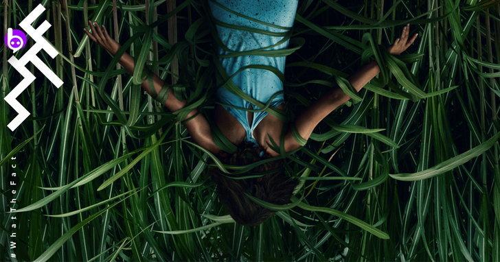[รีวิว] In the Tall Grass หนังที่ผู้สร้างบอกน่ากลัวระดับ Hereditary