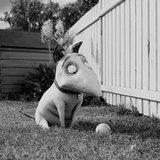 ทิม เบอร์ตัน ส่งภาพชุดแรก Frankenweenie ยั่วน้ำลายแฟนๆ