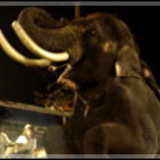 มนุษย์เหล็กไหล ได้ ช้างสึนามิ ช้างฝีมือระดับฮอลลีวู๊ดร่วมฉากอลังการ