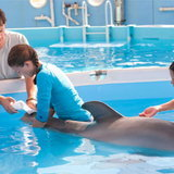 หนัง Dolphin Tale