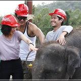 คริส ควง เคลลี่ ตั้งเป้าไถ่ชีวิต ช้าง ใน เกมเนรมิต