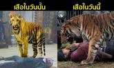 """จากวันนั้น ถึงวันนี้...พัฒนาการซีจี """"เสือ"""" ช่อง 7 มาไกลจนชาวเน็ตชม"""