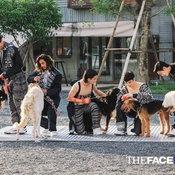 the face men thailand