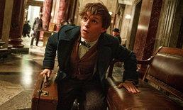 โลกเวทมนตร์ แฮร์รี่ พอตเตอร์ กำลังจะกลับมา Fantastic Beasts and Where to Find Them