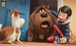 ดูแล้วบอกต่อ วิจารณ์หนัง THE SECRET LIFE OF PETS ใครๆก็อยากกลับบ้าน