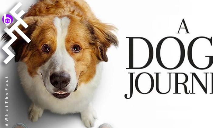 [รีวิว] A Dog s Journey ยิ้มร่าน้ำตาริน