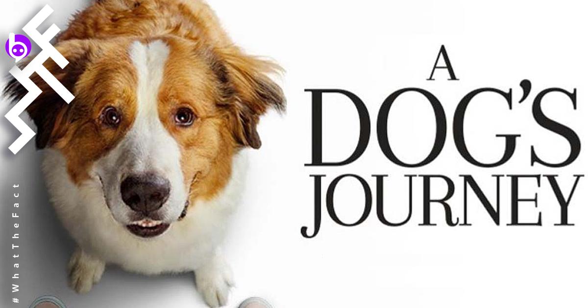 [รีวิว] A Dog's Journey ยิ้มร่าน้ำตาริน