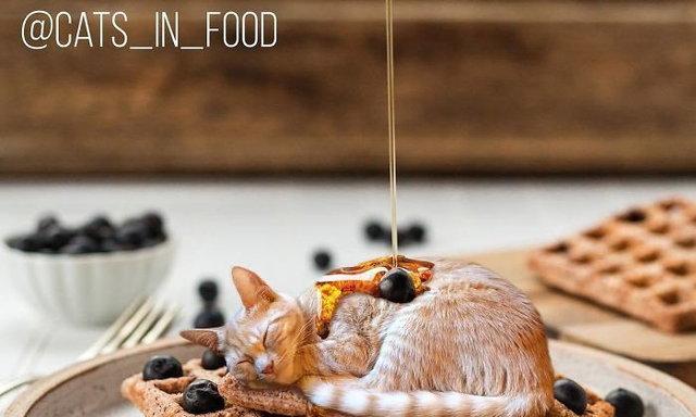 15 ภาพโฟโต้ช้อปขั้นเทพ ฟีเจอริ่งแมวและของกินได้น่ารักขนาดนี้ใครจะกินลง