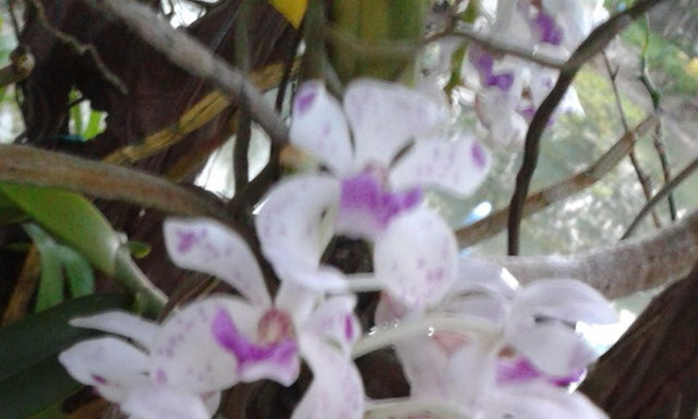 ดอกไม้...ธรรมดา ?
