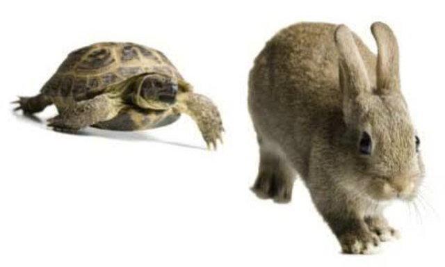 เรื่องเล่าสร้างกำลังใจ กระต่ายกับเต่า