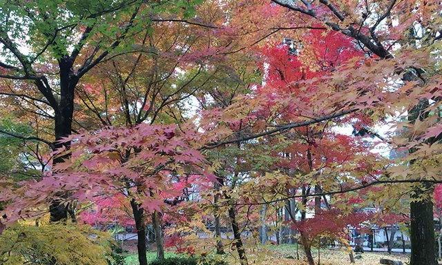 หนึ่งปีมีครั้ง ทริปสวยใบไม้เปลี่ยนสีที่ญี่ปุ่น