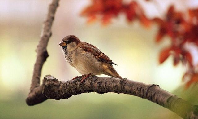 นกกว่า 3000 ล้านตัว สูญสิ้นไปแล้วในสหรัฐฯ และแคนาดา นับแต่ปี ค.ศ.1970