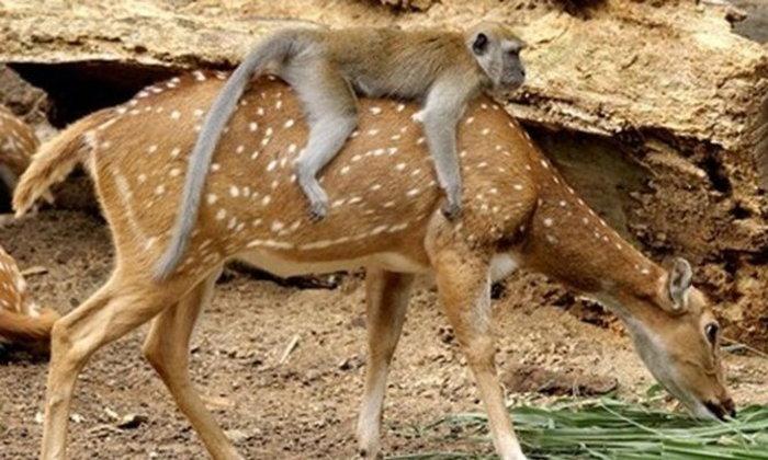 12 ภาพสัตว์หาดูยาก หวาดเสียวแต่ก็น่ารัก
