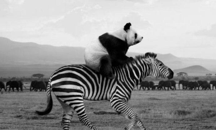 ภาพถ่ายสุดฮาของสัตว์โลกยามเมื่อคนไม่ได้เฝ้ามอง