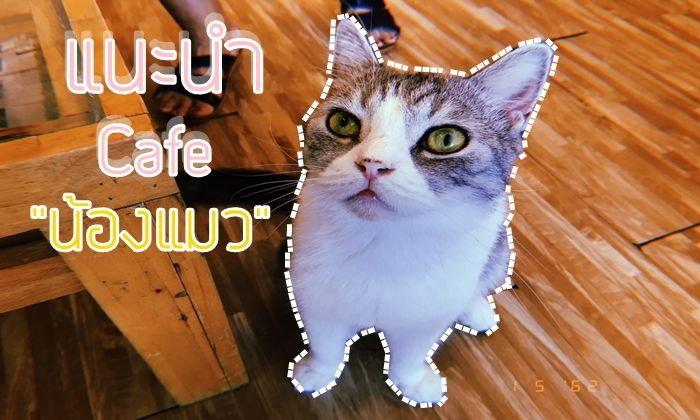 แนะนำ Cafe แมว (เมืองเอก)