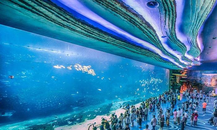 Top 5 อควาเรียมที่ใหญ่ที่สุดในโลก ชวนคุณไปจ้องตาปลาฉลามและสัตว์น้ำหายาก!