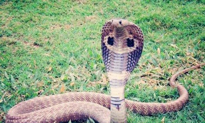 มีรูจึงมีงู เสียงงูขู่ดังฟู่มา