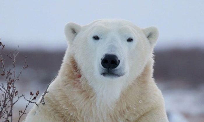 โฉมหน้าสัตว์หายากจากทั่วโลกที่กำลังจะสูญพันธุ์ไปในไม่ช้า