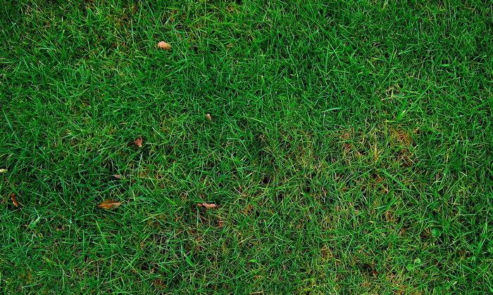 ต้นหญ้าใต้รองเท้า หรือนั่นสวยงามยิ่งกว่าดอกไม้ริมทาง? #เรื่องเล่าจากบอลลูน