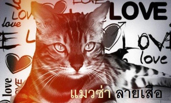 แมวซ่าลายเสือ (บทส่งท้าย)