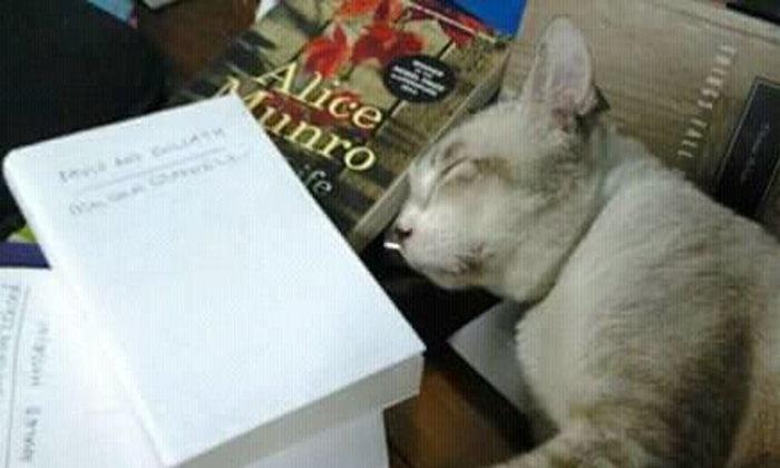 คุยเฟื่องเรื่องการอ่าน : อ่านหนังสืออะไรและอ่านไปทำไม