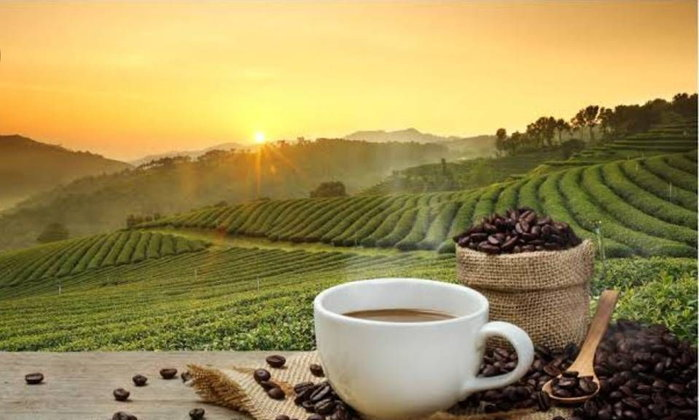 #สารคาเฟอีนในกาแฟแต่ละสายพันธุ์ แตกต่างกันอย่างไร? ที่สำคัญยังช่วยลดน้ำหนักได้อย่างน่าทึ่ง..