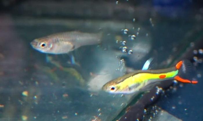 แนวทางการเลี้ยงปลาเอนเลอร์
