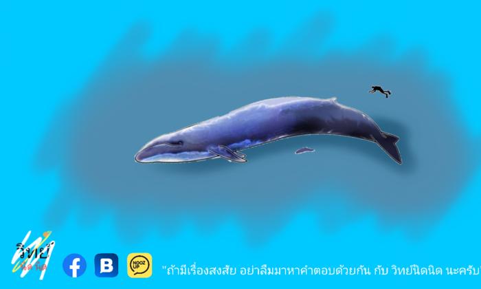 สัตว์ที่ใหญ่ที่สุดในโลก ใหญ่หนาดไหน ?