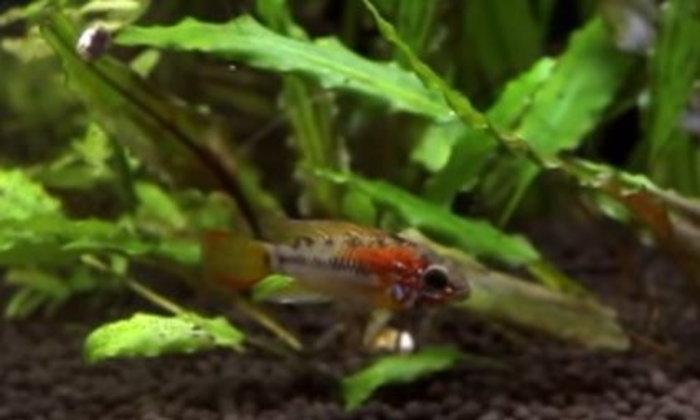 ปลาขนาดเล็กชนิดใดบ้าง...ที่สามารถจะเลี้ยงเพียงตัวเดียวได้ และไม่ทำให้มันรู้สึกเครียด...